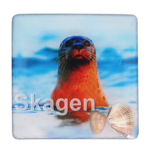 Magnet Med Musling Sæl Vesterhavet Skagen