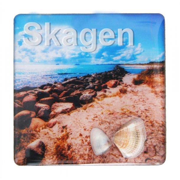 Magnet Med Musling Sten Vesterhavet Skagen